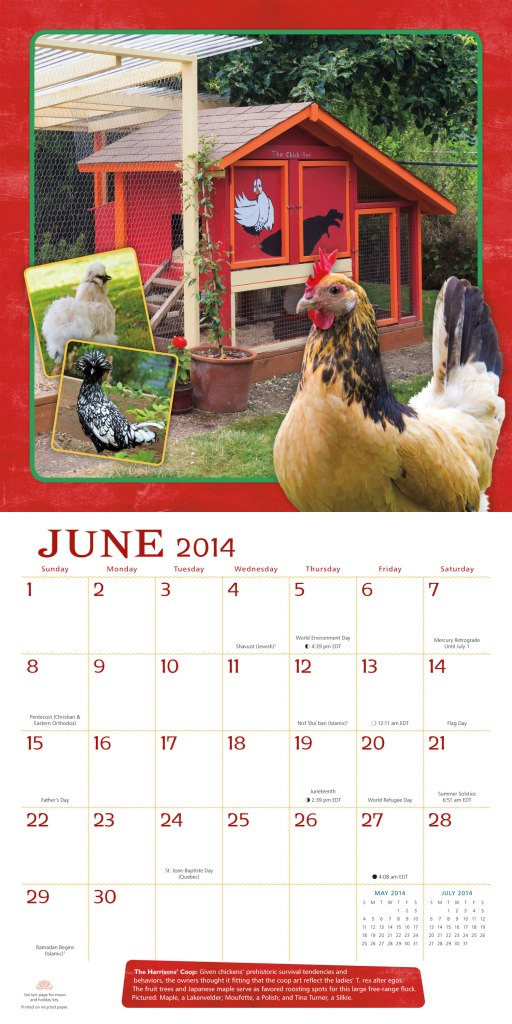 Interior Spread of the City Chickens calendar.