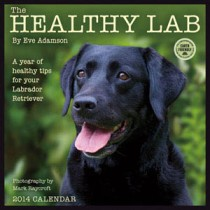The Healthy Lab