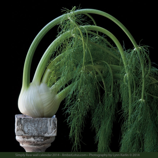 Fennel - Photograph by Lynn Karlin