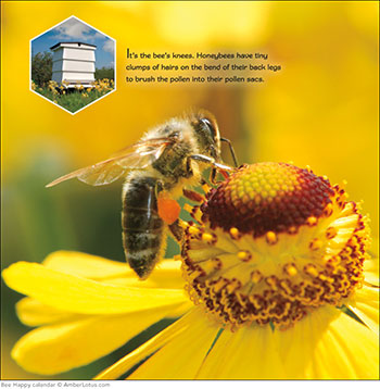 Bee Happy 2015 wall calendar