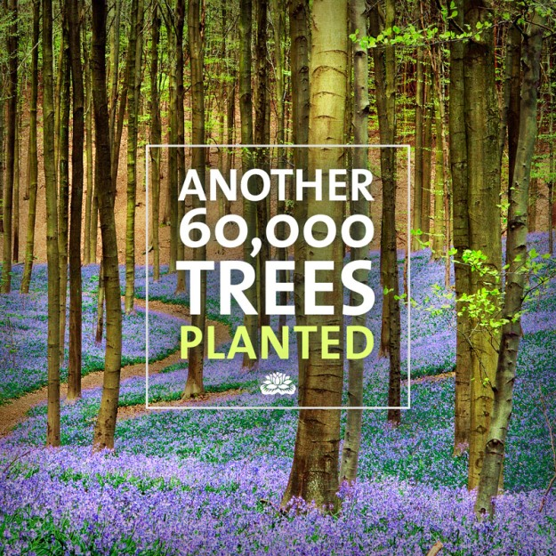 60,000 Trees Planted