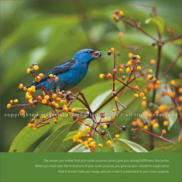 Image from our Power of Now 2017 wall calendar. Blue Dacnis, La Selva, Costa Rica © David Tipling. Click image for more info.